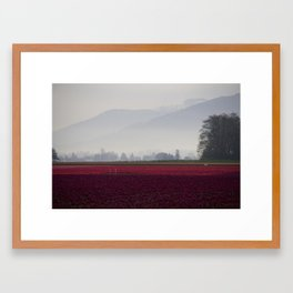 Tulip Fields in the Morning Light Framed Art Print