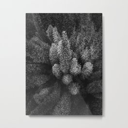 closeup succulent plant garden in black and white Metal Print
