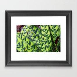 Rattlesnake Plant Framed Art Print