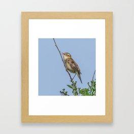 Sedge Warbler Framed Art Print