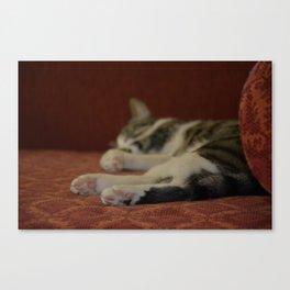 Cat Paws Canvas Print