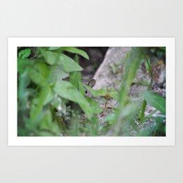 Peek-A-Boo, Mousie Art Print