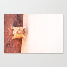 Desert's Kitten, Petra, Jordanie Canvas Print