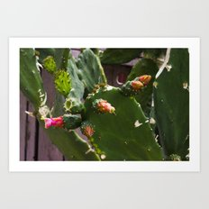 Summer Cactus in Flower Art Print