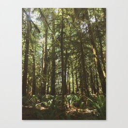 Deer in Olympic Forest Canvas Print