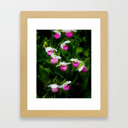 Lady's Slipper patch Framed Art Print
