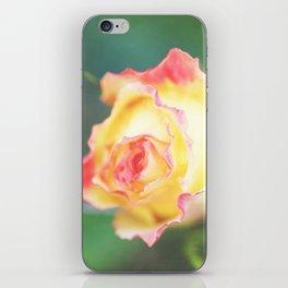 Rose in yellow iPhone Skin