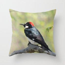 Acorn Woodpecker At Rest Throw Pillow