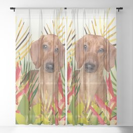 Little Dog with with Palm leaves Sheer Curtain