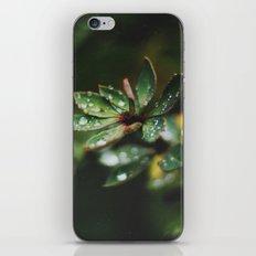 Autumn Rain iPhone & iPod Skin