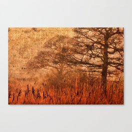 Misty Trees in Watergate Park Canvas Print