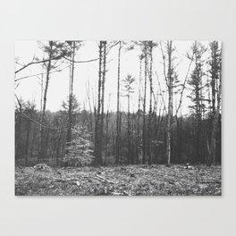 Autumn 9 Canvas Print