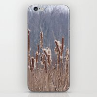 furry iPhone & iPod Skins featuring Furry Cattails by DanByTheSea