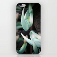Minty Leaves iPhone & iPod Skin