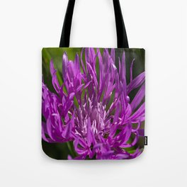 Pink Magenta Majestic Garden flower wild Centaurea in bloom Summer time Tote Bag