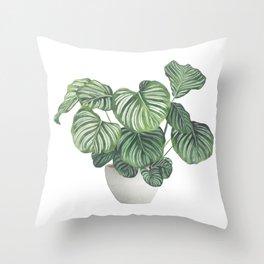 Potted Calathea Orbifolia Plant Throw Pillow