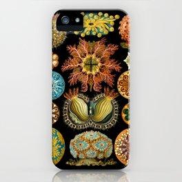 Ernst Haeckel - Scientific Illustration - Ascidiae iPhone Case