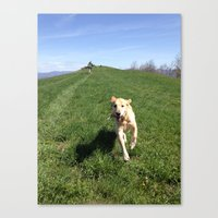 glee Canvas Prints featuring glee by From the Figg Tree