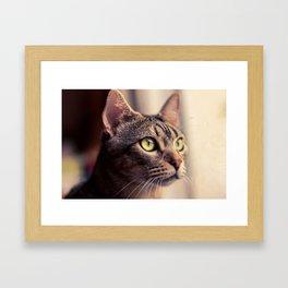 Tristan, el gato. Framed Art Print