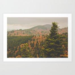 Evergreen Fall (Asheville, North Carolina, USA) Art Print