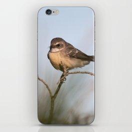 Bird in the morning light iPhone Skin