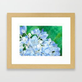 Watercolor Hydrangea Blossoms Framed Art Print