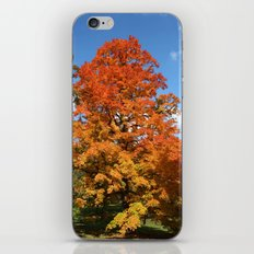 Red, Orange, Yellow Tree Color Photography iPhone & iPod Skin