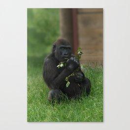 Cheeky Gorilla Lope Canvas Print