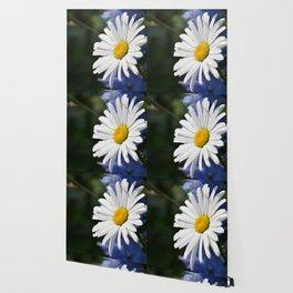 White Daisy Flower Loves Me Loves Me Not Wallpaper
