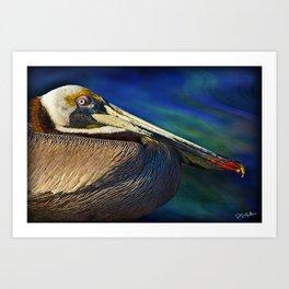 Pelican Indian River Lagoon 1 Art Print