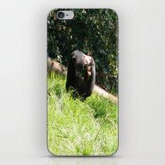 Sun Bear Profile iPhone & iPod Skin