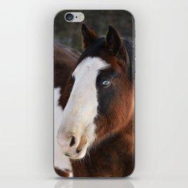 Wolly Talon (horse) iPhone Skin