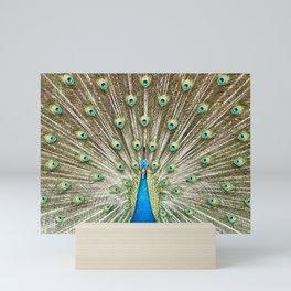 Romeo Feather Display Mini Art Print