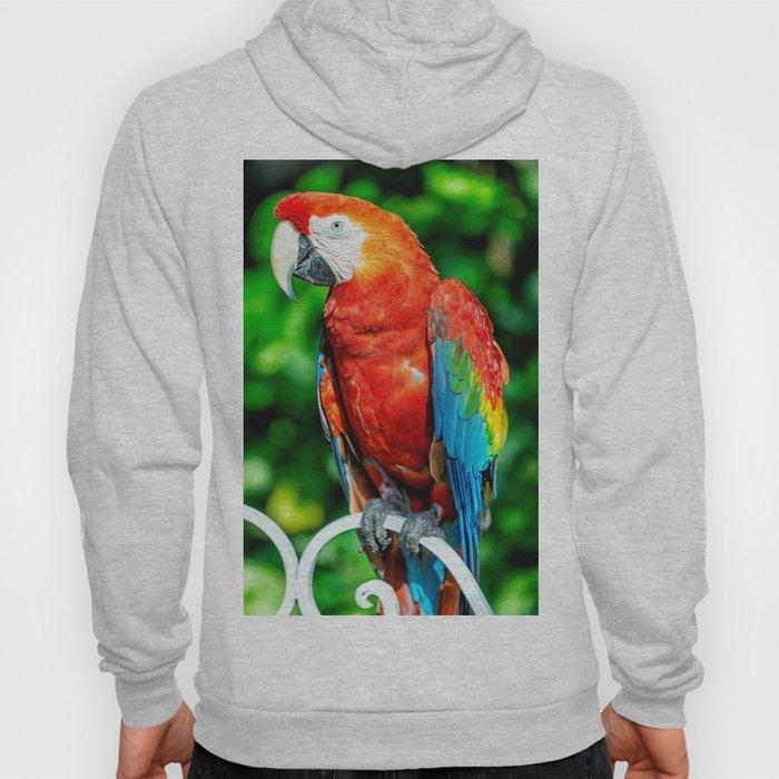 Amazon Parrot Hoody