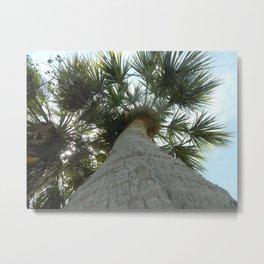 Tall Florida Palm Metal Print