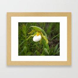 Small White Lady's Slipper Framed Art Print