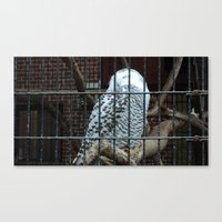 hedwig Canvas Prints featuring Hedwig by CPKC27