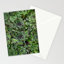 Hen & Chicks Stationery Cards