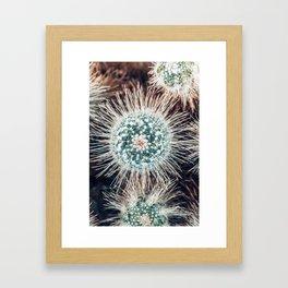 Cactus Study #1 Framed Art Print