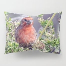 Handsome Male House Finch Pillow Sham