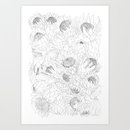 King and Queen Proteas Art Print