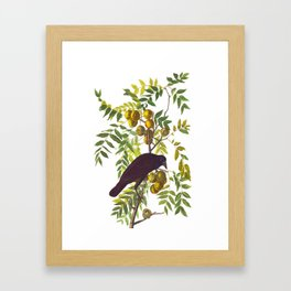 American Crow Hand Drawn Illustrations Vintage Scientific Art John James Audubon Birds Framed Art Print