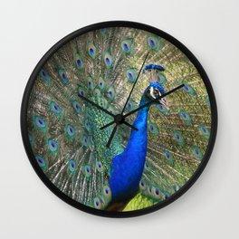 peacock during mating season Wall Clock