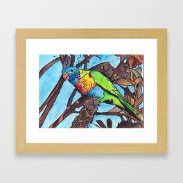 Lorikeet In The Tree Framed Art Print