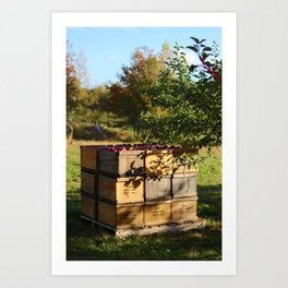 Apple Crates Art Print