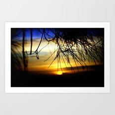 Sunset between pine Needles Art Print