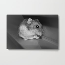 Pursuit of the Sunflower Seed Metal Print