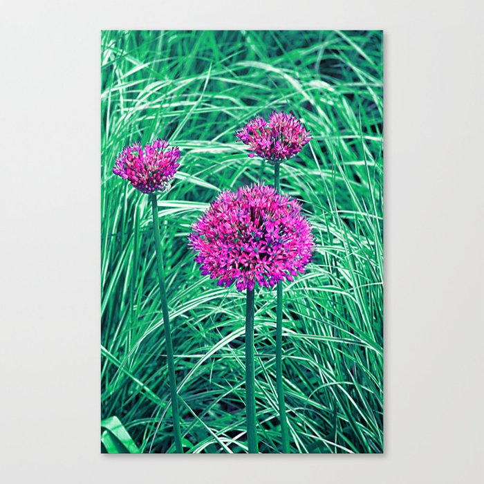Purple ball flowers Canvas Print
