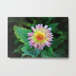 Dahlia With Green Leaves Metal Print