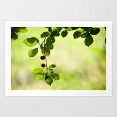 Cherries 5318 Art Print